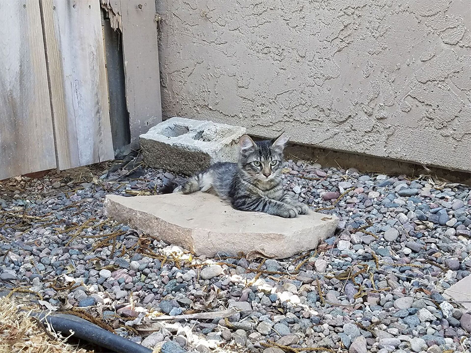 neighbor-kitten