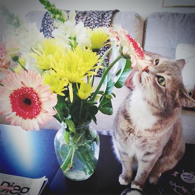 blommakatt