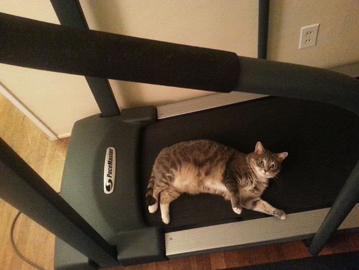 treadmillcat